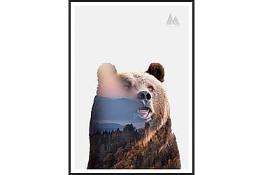 Bear Bilde