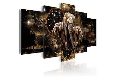 Bilde Brown Elephants 200x100
