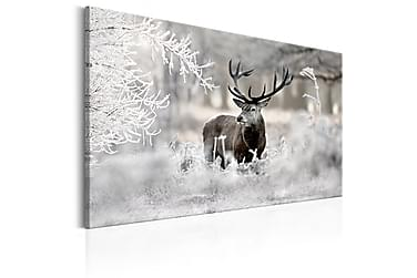 Bilde Lonely Deer 90x60