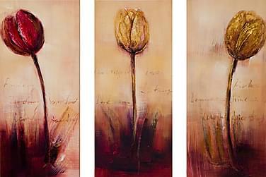 Bilde Tulipan