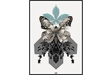 Butterfly Bilde