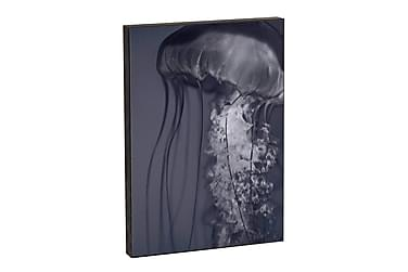 Carma Nature 71 Jellyfish 2