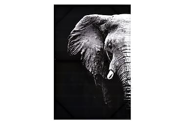 Elefant Bilde
