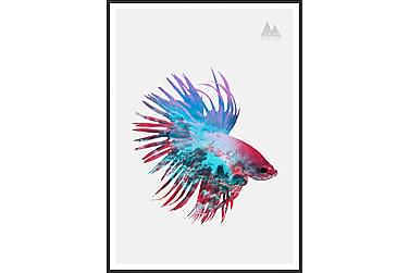 Fighting Fish Bilde