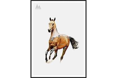 Horse Bilde