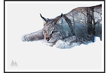 Lynx Bilde