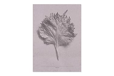 Mad Shiso Leave, Pink