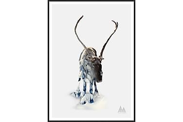 Reindeer Bilde