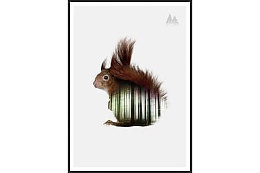 Squirrel Bilde