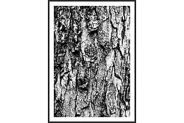 Träd Bilde