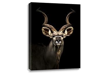 Antilope Digitalprintet Bilde 75x100 cm