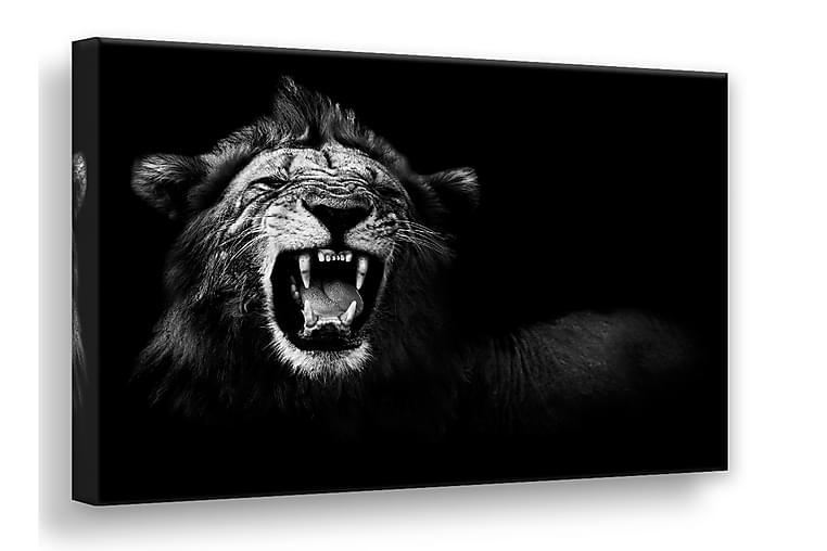 Canvas Lion Bilde - 75x100 - Innredning - Veggdekorasjon - Lerretsbilder