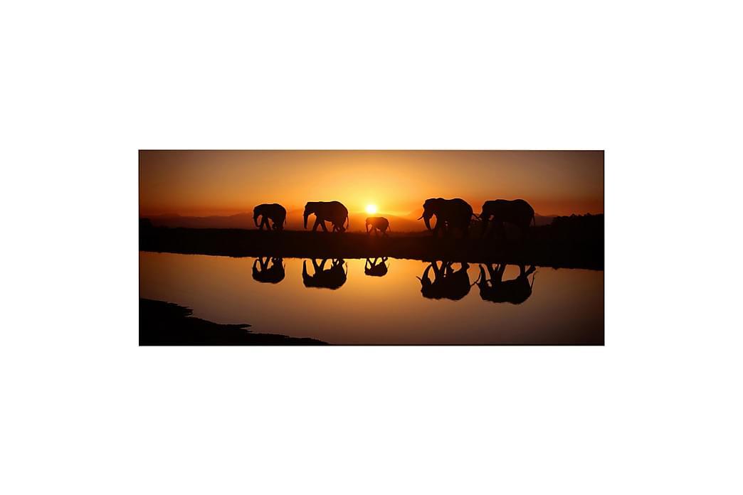 Homemania Elefant Rammeverk - Homemania - Innredning - Veggdekorasjon - Lerretsbilder