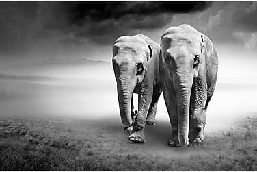 Kanvas Elephant