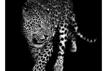 Kanvas Leopard
