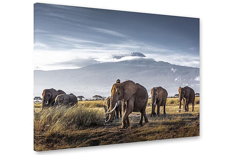 Kilimanjaro Elephants Bilde 75x100 cm - Multifarge - Innredning - Veggdekorasjon - Lerretsbilder