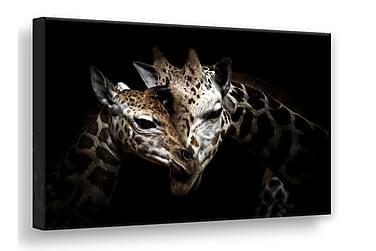 Wild Giraffes Bilde 75x100 cm