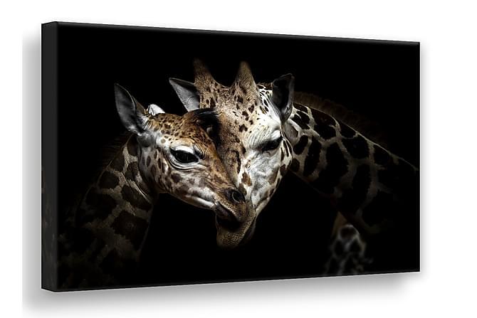 Wild Giraffes Bilde 75x100 cm - Lerret - Innredning - Veggdekorasjon - Lerretsbilder