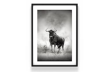 Bøffel Poster
