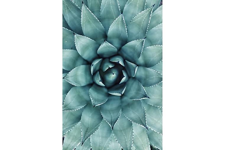 Green Cactus Poster - 50x70cm - Innredning - Veggdekorasjon - Posters