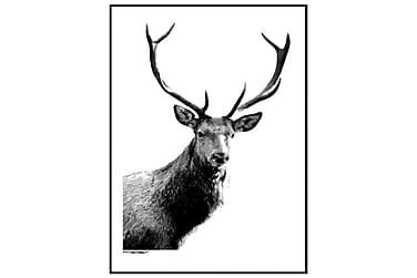 Poster Deer